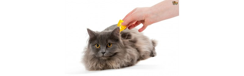 Cat Flea & Tick Treatments