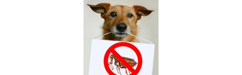 Flea & Tick Treatments