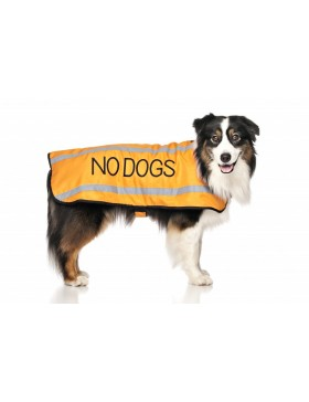 No Dogs Coat